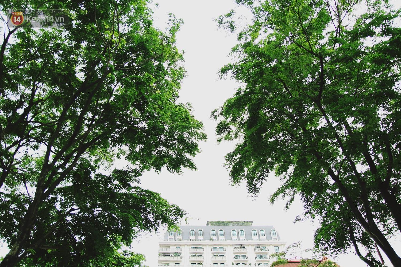 Người Hà Nội tiếc nuối hàng cây sưa quý hiếm chuẩn bị di dời để xây ga ngầm - Ảnh 10.