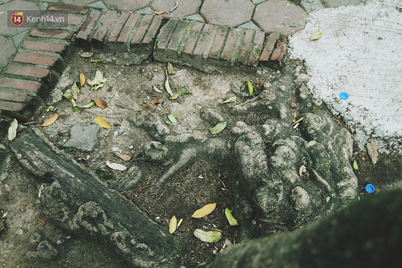Người Hà Nội tiếc nuối hàng cây sưa quý hiếm chuẩn bị di dời để xây ga ngầm - Ảnh 9.