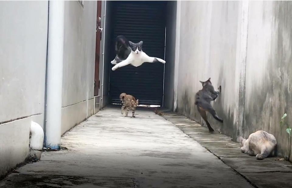Clip: Màn thoát thân qua 3 cường địch của boss mèo tam thể gây chấn động MXH - Ảnh 3.