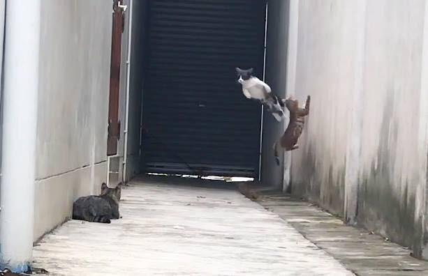 Clip: Màn thoát thân qua 3 cường địch của boss mèo tam thể gây chấn động MXH - Ảnh 2.