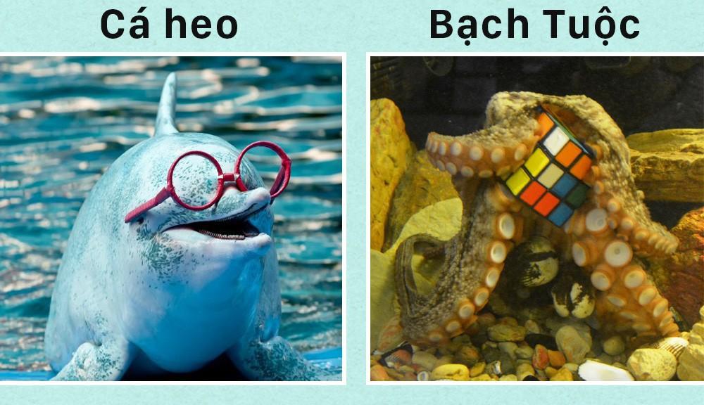 Xin chào! Tôi là bạch tuộc và đây là 5 sự thật về tôi mà các ông chẳng biết gì - Ảnh 3.