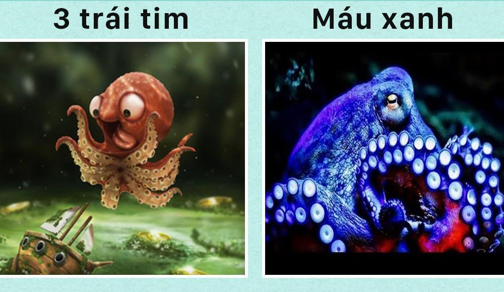 Xin chào! Tôi là bạch tuộc và đây là 5 sự thật về tôi mà các ông chẳng biết gì - Ảnh 1.
