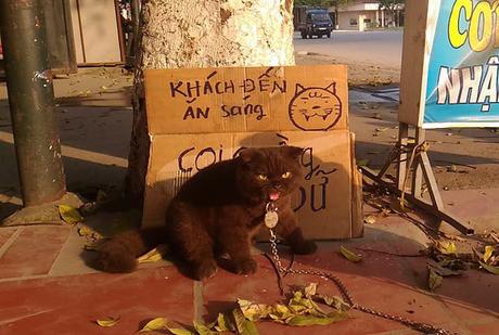 Tạm quên chú mèo tên Chó đi, ở Hải Phòng còn có cả mèo bảo kê đang nổi như cồn trên MXH đây này - Ảnh 1.