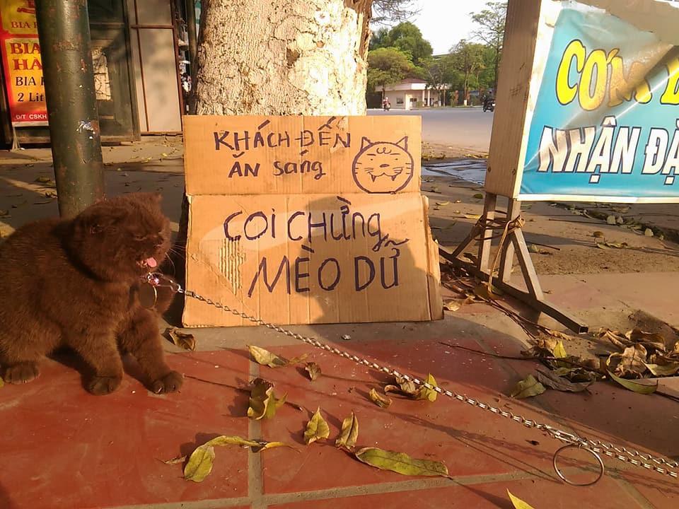 Tạm quên chú mèo tên Chó đi, ở Hải Phòng còn có cả mèo bảo kê đang nổi như cồn trên MXH đây này - Ảnh 3.