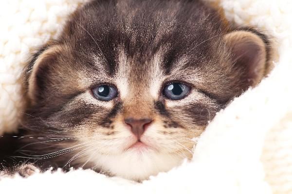 Mèo cũng biết khóc, và bạn phải cẩn thận với điều đó - Ảnh 2.