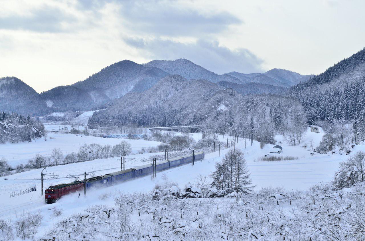 Người dân Nhật ngỡ ngàng chiêm ngưỡng những bông hoa anh đào băng tuyết trong thời tiết lạnh giá kéo dài - Ảnh 15.