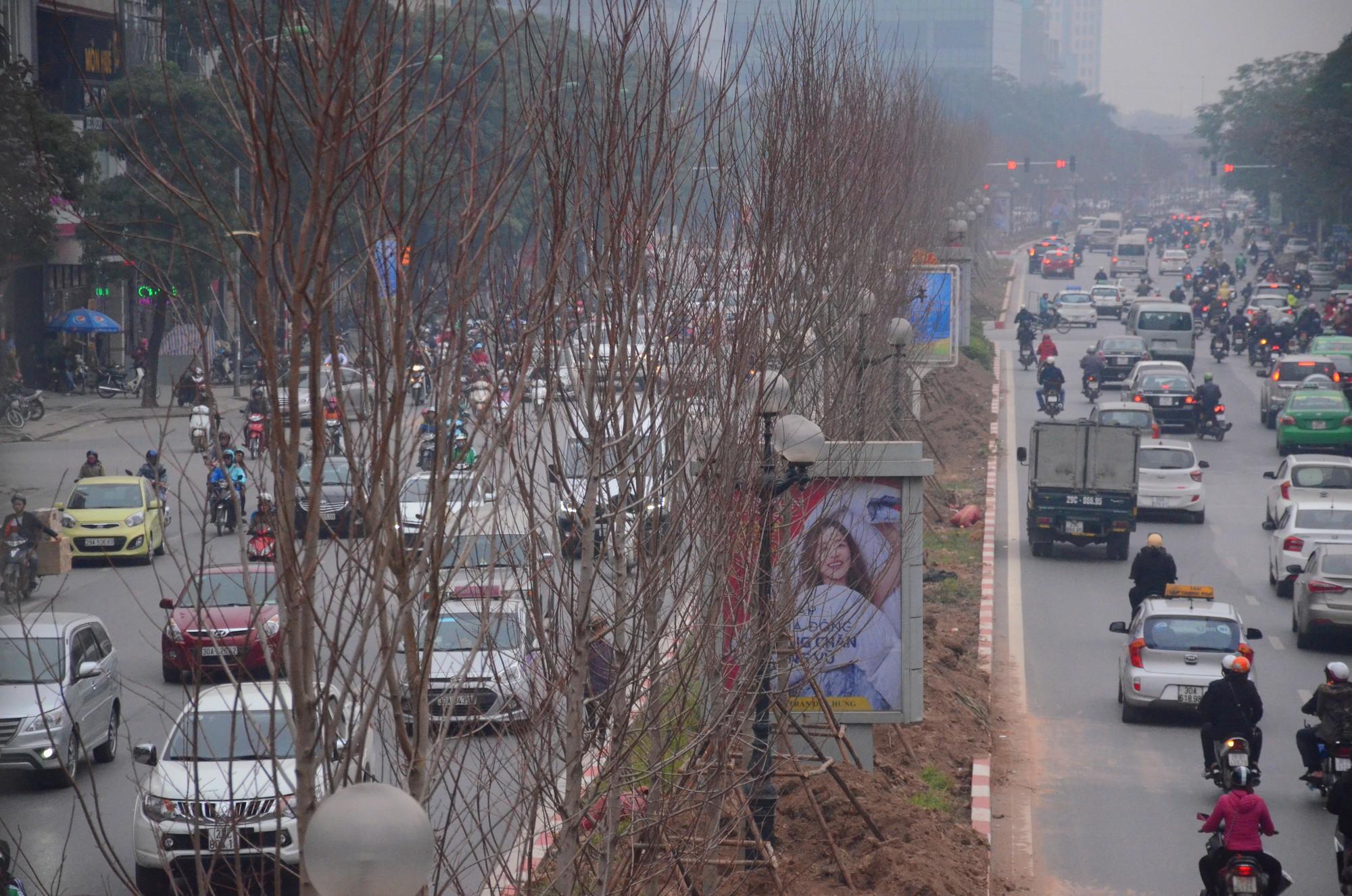 Chùm ảnh: Tận thấy hàng trăm cây phong lá đỏ mới được trồng trên phố Trần Duy Hưng ở Hà Nội - Ảnh 7.