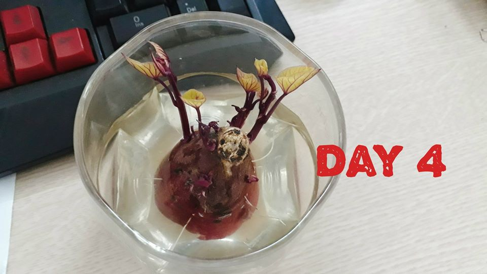 Hành trình trở thành hoa khôi văn phòng bất đắc dĩ của một củ khoai lang - Ảnh 2.