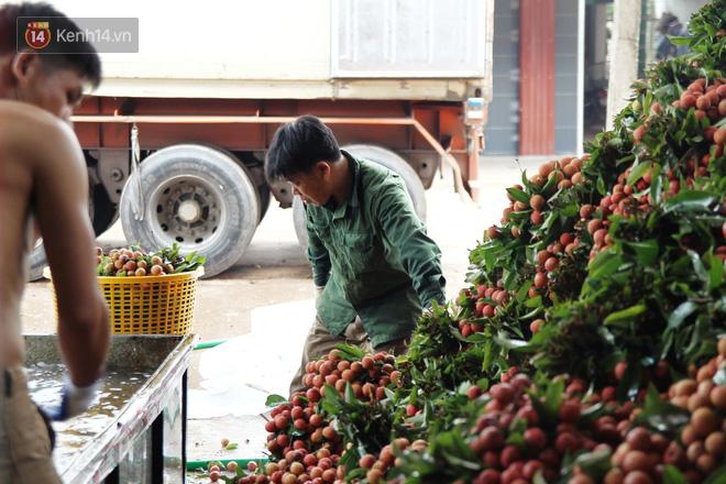 Về Bắc Giang thăm người dân Lục Ngạn trước thông tin 10 ngàn 3kg vải thiều: Làm gì có chuyện chúng tôi ném vải xuống sông - Ảnh 3.