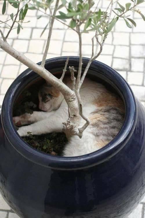 Chùm ảnh: Những pha ngủ ngày bá đạo của các quàng thượng mèo trên khắp cả nước - Ảnh 4.
