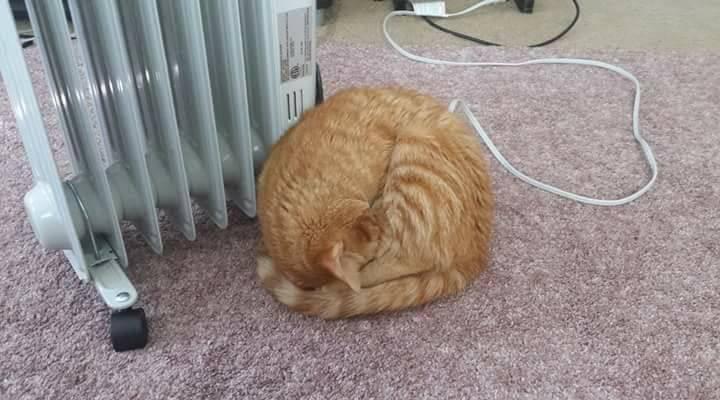 Chùm ảnh: Những pha ngủ ngày bá đạo của các quàng thượng mèo trên khắp cả nước - Ảnh 6.