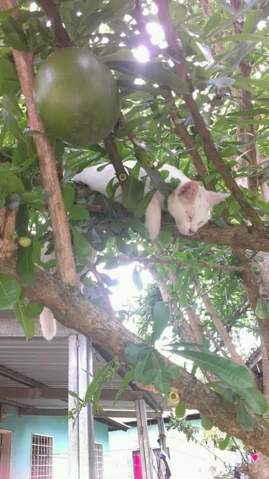 Chùm ảnh: Những pha ngủ ngày bá đạo của các quàng thượng mèo trên khắp cả nước - Ảnh 8.