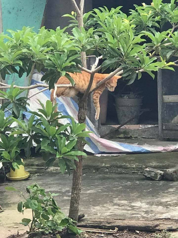 Chùm ảnh: Những pha ngủ ngày bá đạo của các quàng thượng mèo trên khắp cả nước - Ảnh 3.