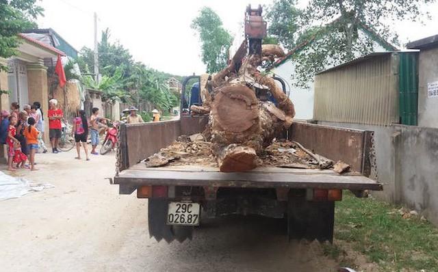 Hợp đồng cẩu trộm cây mít hàng chục năm tuổi có giá 40 triệu đồng - Ảnh 1.
