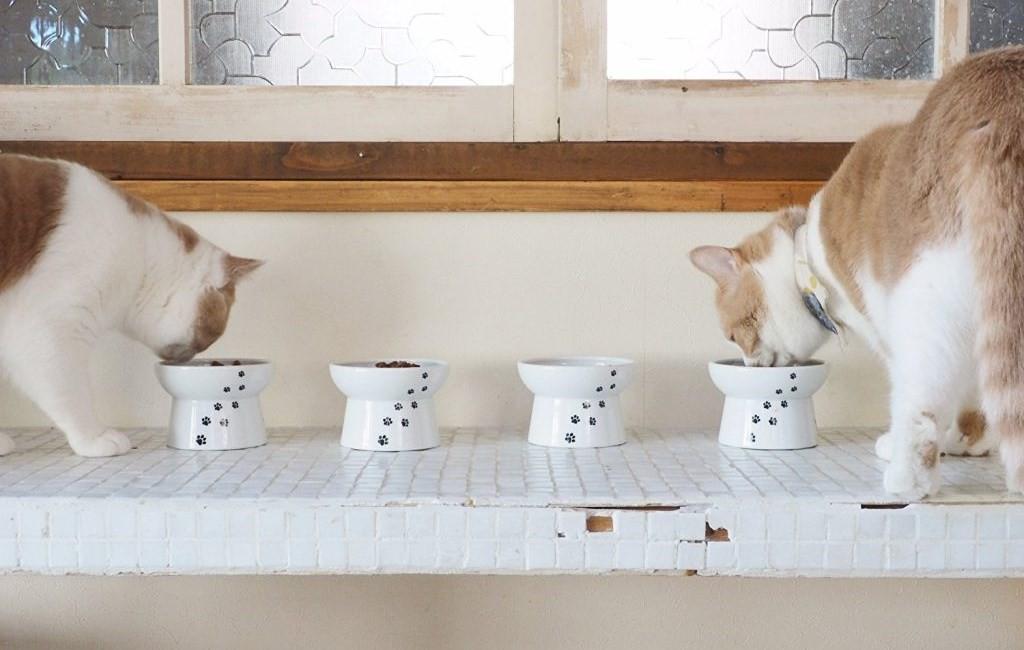 Loạt đồ chăm sóc chiều lòng các boss chó mèo đang khó ở - Ảnh 5.