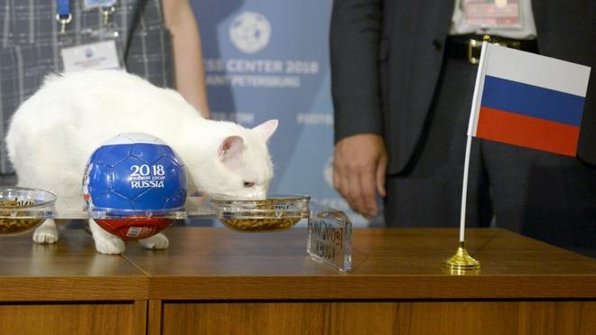 """7 """"nhà tiên tri"""" động vật đã và đang gây sốt vì dự đoán đúng kết quả World Cup Photo-1-15290784957751249723974"""