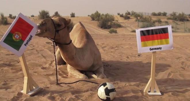 """7 """"nhà tiên tri"""" động vật đã và đang gây sốt vì dự đoán đúng kết quả World Cup Photo-2-15290784957811615706035"""