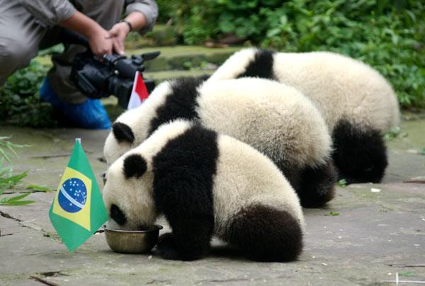 """7 """"nhà tiên tri"""" động vật đã và đang gây sốt vì dự đoán đúng kết quả World Cup Photo-3-15290784957841656292754"""