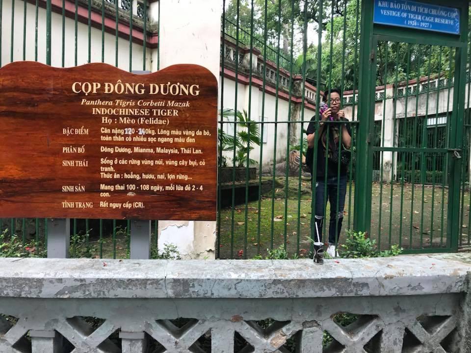 Con hổ bằng bê tông trong Thảo Cầm Viên bất ngờ nổi tiếng trên MXH vì biểu cảm xuất sắc - Ảnh 4.