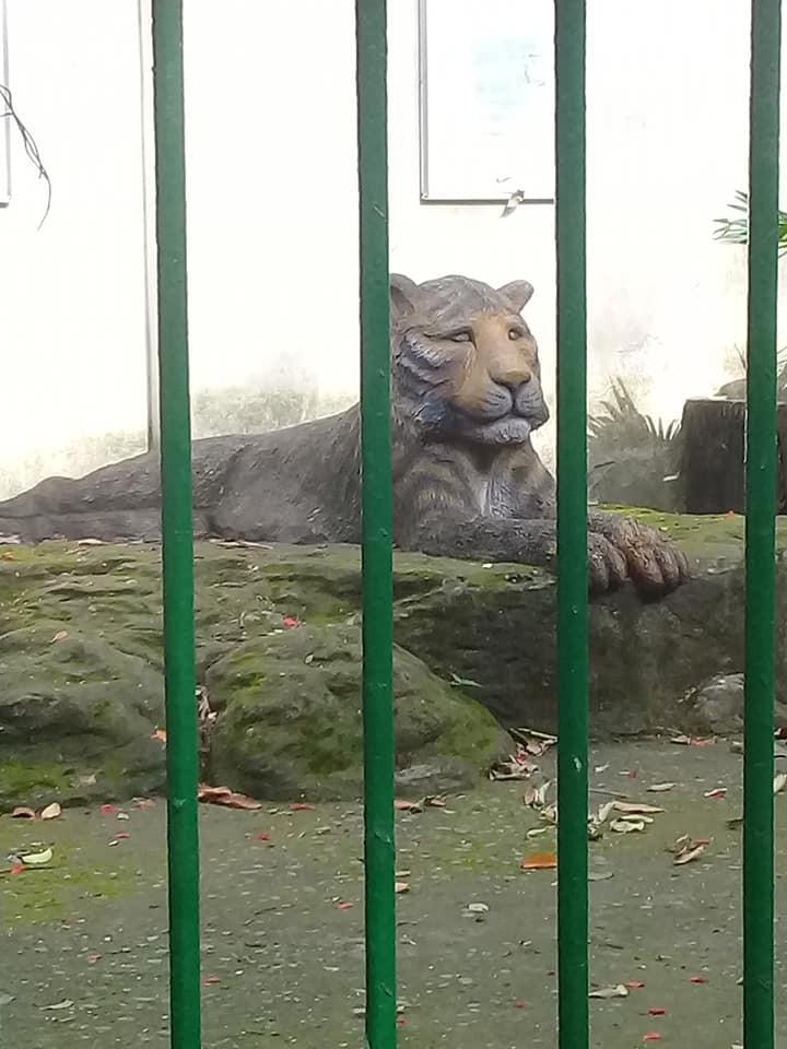 Con hổ bằng bê tông trong Thảo Cầm Viên bất ngờ nổi tiếng trên MXH vì biểu cảm xuất sắc - Ảnh 2.