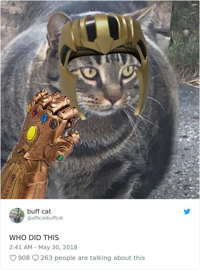 Sở hữu thân hình đô vật, boss mèo cơ bắp gây sốt trên MXH Twitter - Ảnh 6.