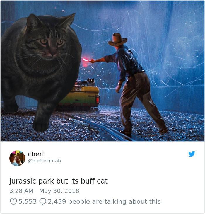 Sở hữu thân hình đô vật, boss mèo cơ bắp gây sốt trên MXH Twitter - Ảnh 5.
