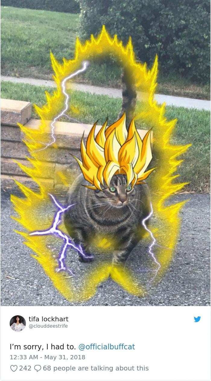 Sở hữu thân hình đô vật, boss mèo cơ bắp gây sốt trên MXH Twitter - Ảnh 4.