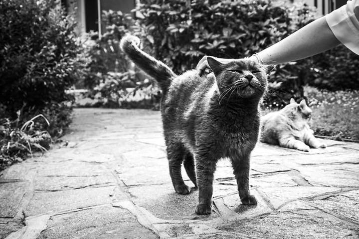 Bộ ảnh Catisfaction chụp lại khoảnh khắc hạnh phúc của những chú mèo - Ảnh 1.