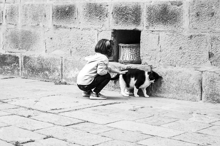 Bộ ảnh Catisfaction chụp lại khoảnh khắc hạnh phúc của những chú mèo - Ảnh 14.