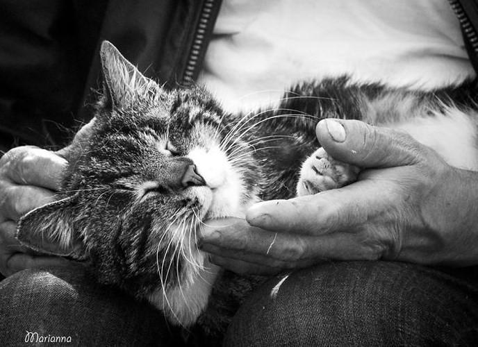 Bộ ảnh Catisfaction chụp lại khoảnh khắc hạnh phúc của những chú mèo - Ảnh 4.