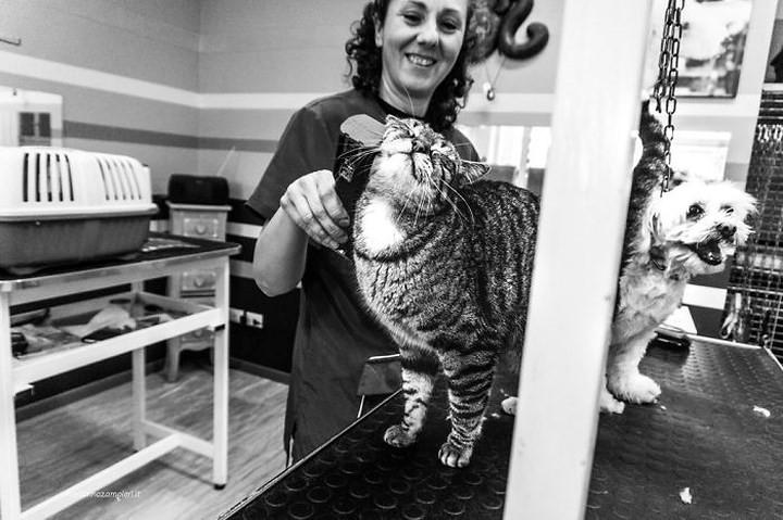 Bộ ảnh Catisfaction chụp lại khoảnh khắc hạnh phúc của những chú mèo - Ảnh 5.