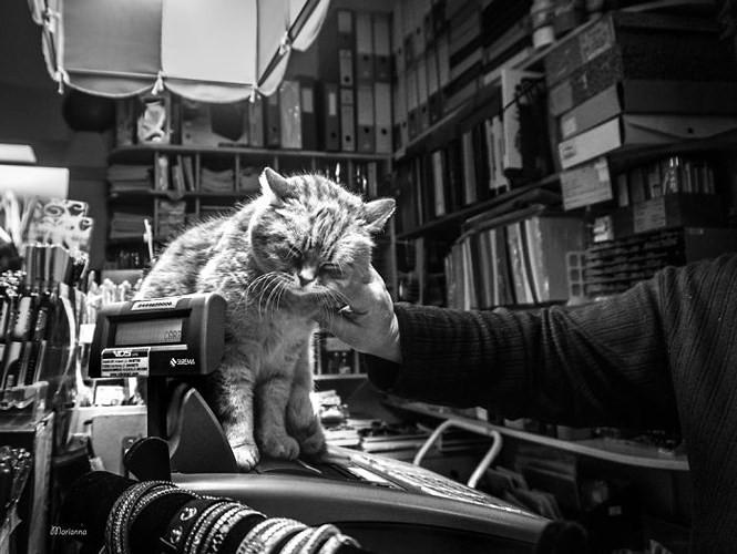 Bộ ảnh Catisfaction chụp lại khoảnh khắc hạnh phúc của những chú mèo - Ảnh 7.