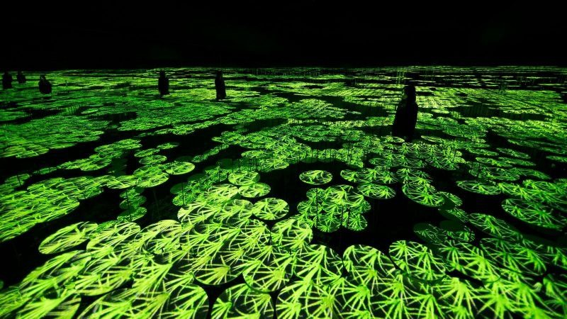 Ghé thăm bảo tàng kỹ thuật số độc đáo ở Nhật Bản: Một thế giới mới ảo diệu đến choáng ngợp, chẳng khác gì khung cảnh trong phim Avatar - Ảnh 8.