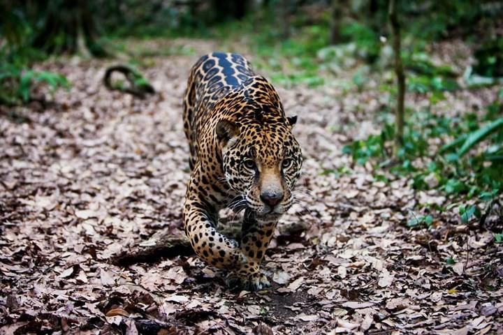 Những bức ảnh cực kỳ ấn tượng về các loài động vật trên khắp thế giới - Ảnh 1.