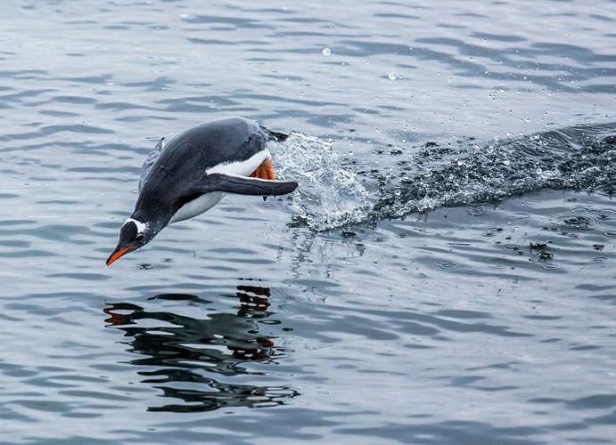Những bức ảnh cực kỳ ấn tượng về các loài động vật trên khắp thế giới - Ảnh 11.