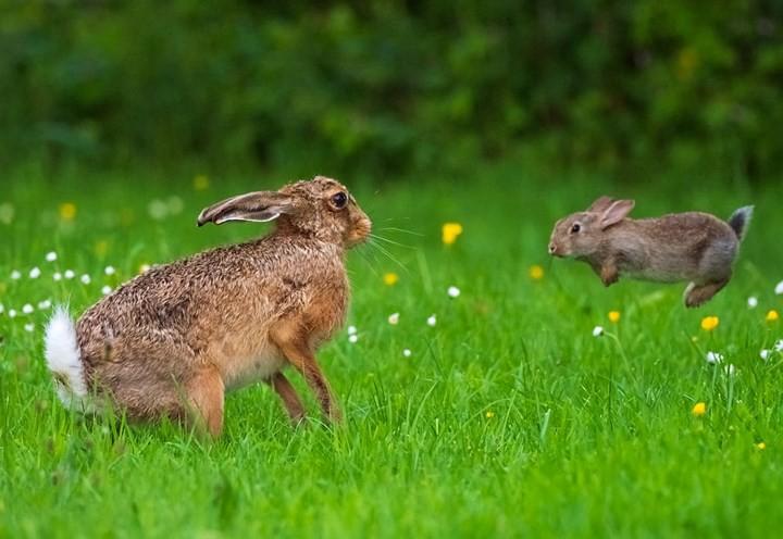 Những bức ảnh cực kỳ ấn tượng về các loài động vật trên khắp thế giới - Ảnh 12.