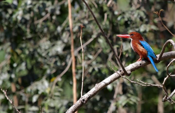 Những bức ảnh cực kỳ ấn tượng về các loài động vật trên khắp thế giới - Ảnh 14.