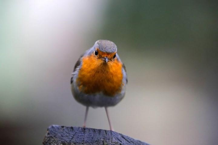 Những bức ảnh cực kỳ ấn tượng về các loài động vật trên khắp thế giới - Ảnh 20.