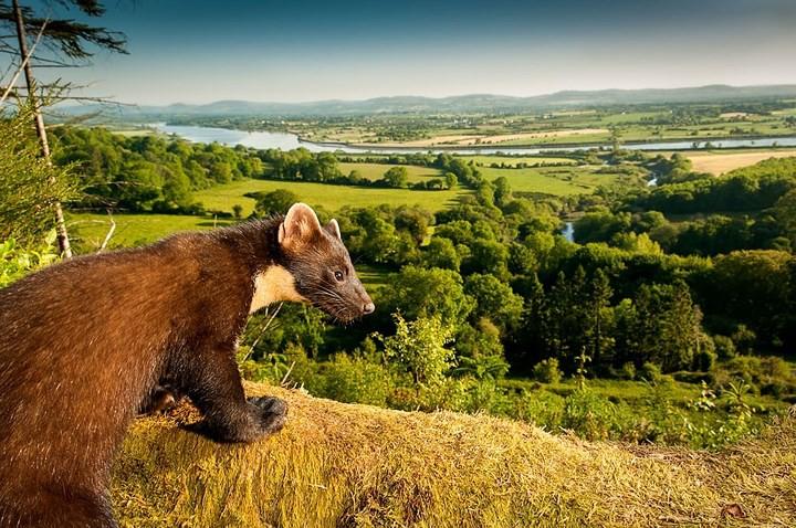 Những bức ảnh cực kỳ ấn tượng về các loài động vật trên khắp thế giới - Ảnh 3.