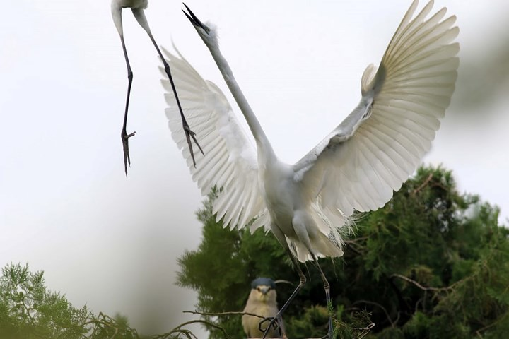 Những bức ảnh cực kỳ ấn tượng về các loài động vật trên khắp thế giới - Ảnh 6.