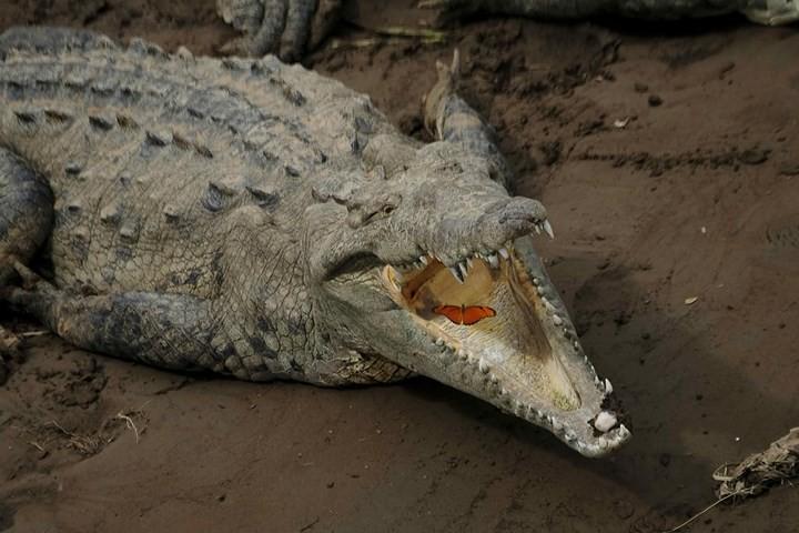 Những bức ảnh cực kỳ ấn tượng về các loài động vật trên khắp thế giới - Ảnh 8.