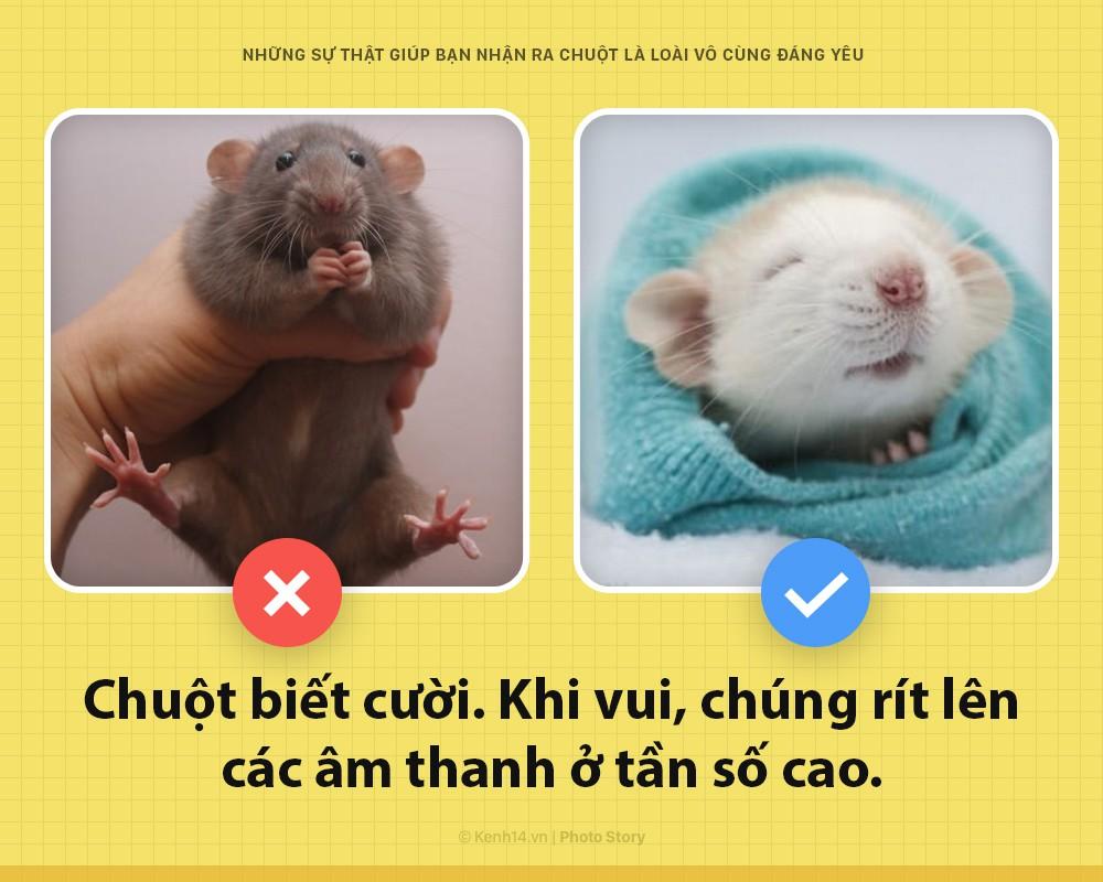 Alo! Là tôi, chuột đây! Và hy vọng nhờ câu chuyện này mà