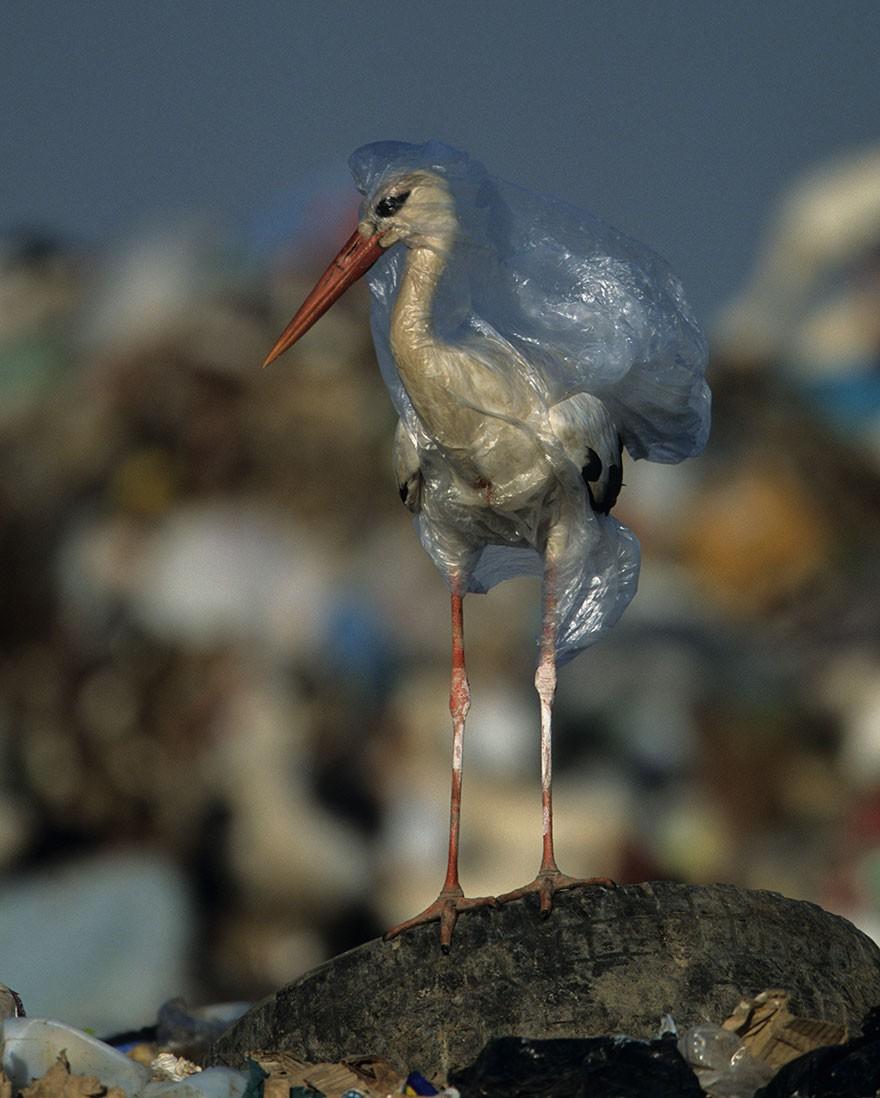 Cả Châu Á đang chung tay chống lại túi nylon, rác thải nhựa như thế