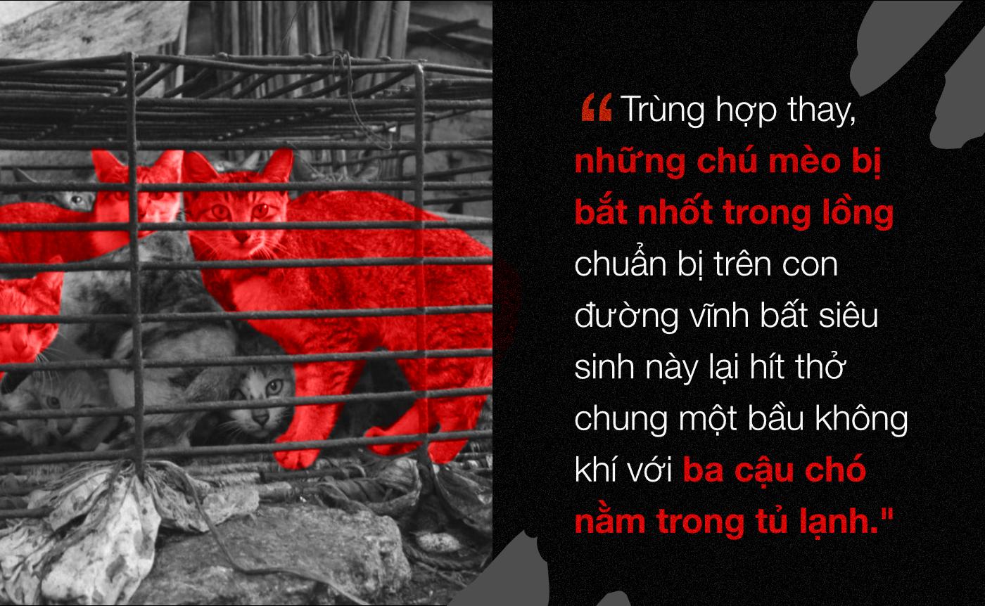 Chuyện ở những đất nước mà chó mèo có hai số phận: Được cưng chiều hết mực, hoặc oặt mình trong lồng cũi tới bàn tiệc - Ảnh 8.