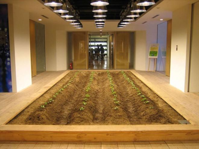 Công ty cho nhân viên trồng lúa trong văn phòng, cuối vụ đưa cả con đến gặt cho vui - Ảnh 13.