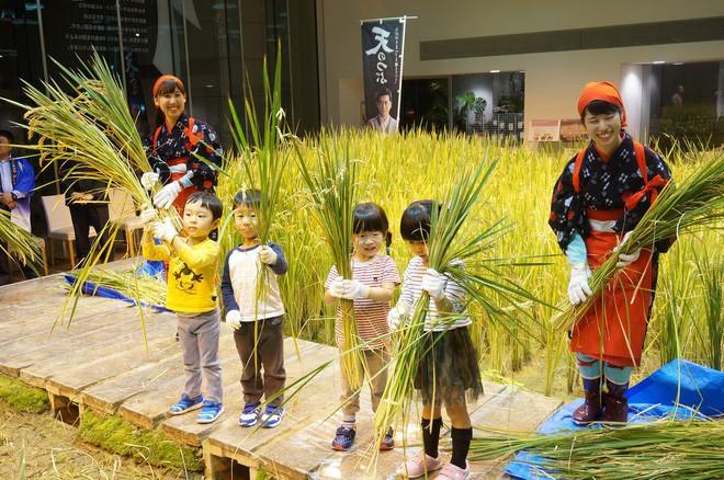 Công ty cho nhân viên trồng lúa trong văn phòng, cuối vụ đưa cả con đến gặt cho vui - Ảnh 6.