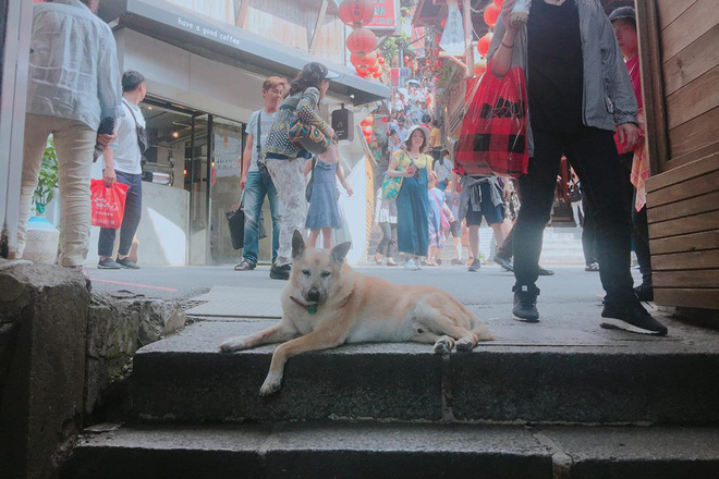 Gặp gỡ siêu boss ở Đài Loan: Chỉ thích ra giữa đường nằm ị thì lị, ai đi qua cũng phải khúm núm không dám ho he nửa lời - Ảnh 2.