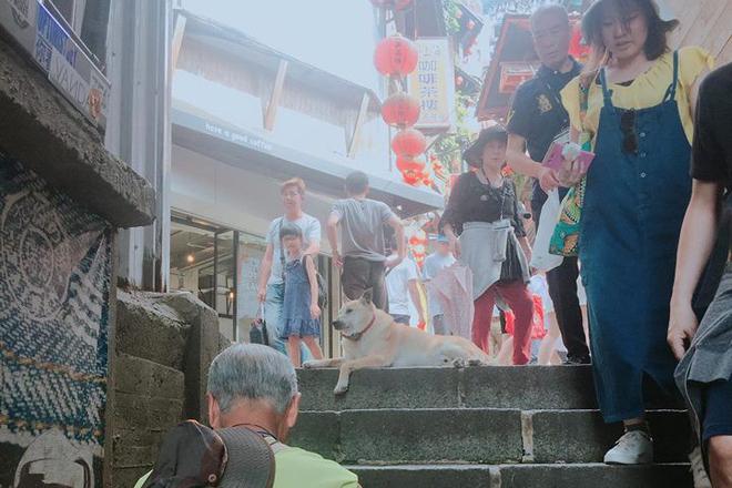 Gặp gỡ siêu boss ở Đài Loan: Chỉ thích ra giữa đường nằm ị thì lị, ai đi qua cũng phải khúm núm không dám ho he nửa lời - Ảnh 3.