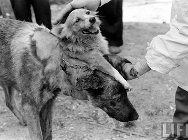 Những bức ảnh tư liệu từ thế kỷ 20, trải qua ngót 100 năm lại trở nên tà mị bất ngờ - Ảnh 3.