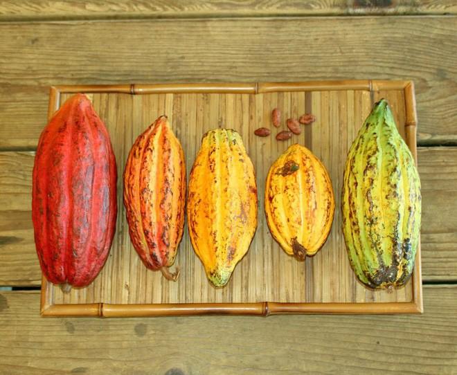 Hành trình biến hạt ca cao thành món chocolate vạn người mê qua lời kể của người thợ lành nghề - Ảnh 4.
